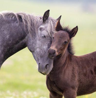 Pferde_MaRhyThe