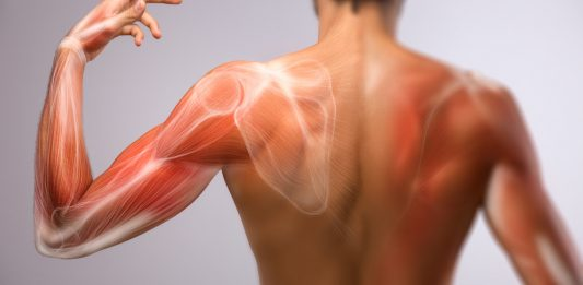 Faszien am Arm und Rücken zu sehen
