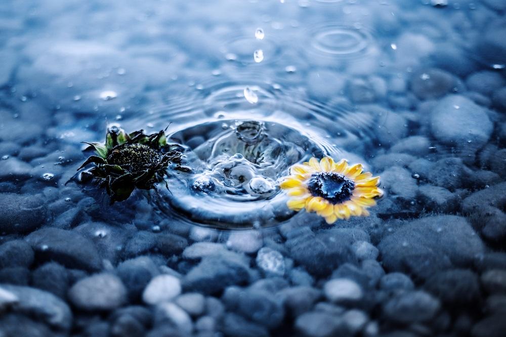Frische Blume im Wasser